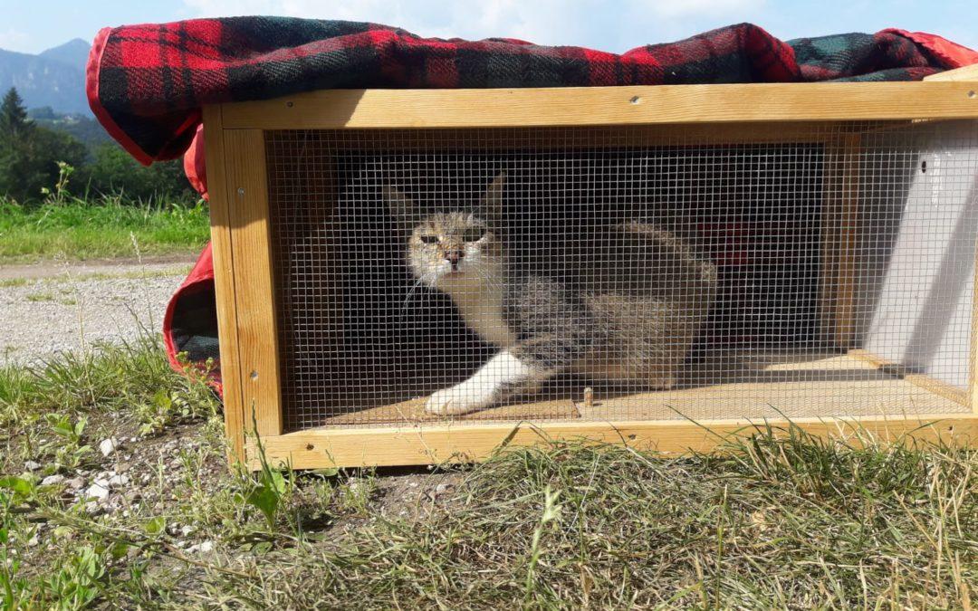 Streunerkatzen-Einfänger auf der Lauer