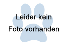 Landschildkröte, Innsbruck (05/19)