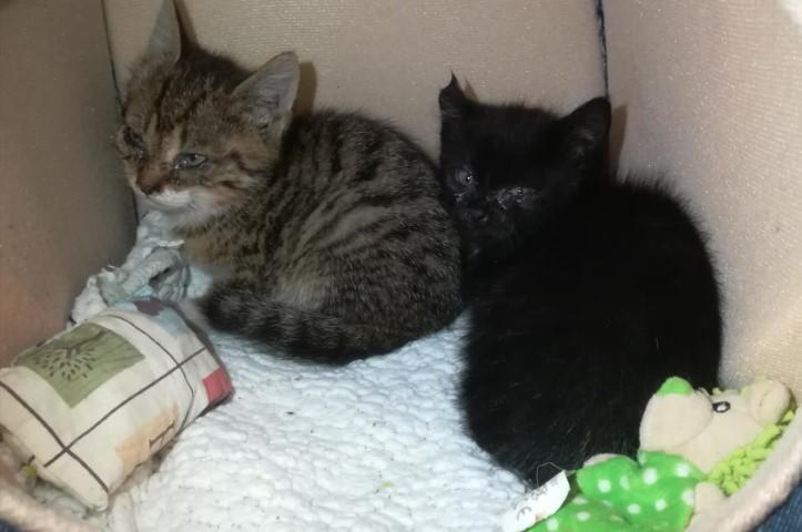 Katzen, Strass im Zillertal (05/19)