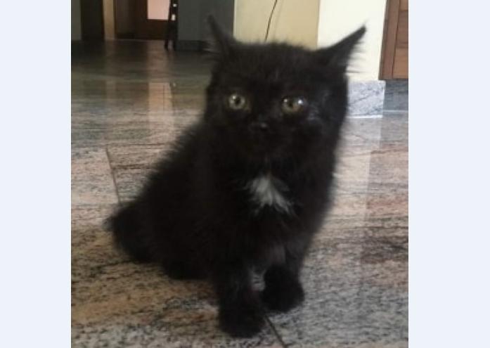 Katze, Wiesing(05/19)