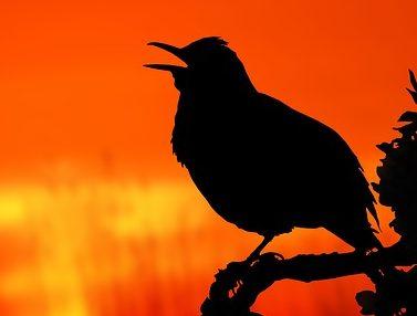 Wer ist der frühe Vogel?