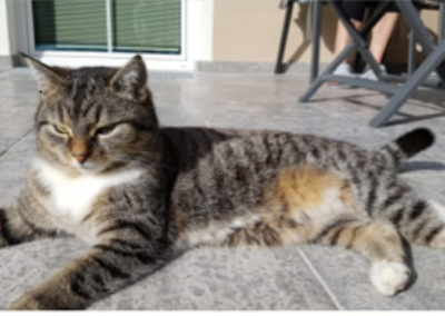 Katze, Radfeld(05/19)