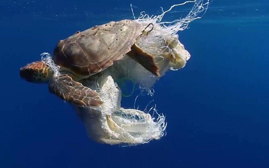 Plastik – Fluch oder Segen?