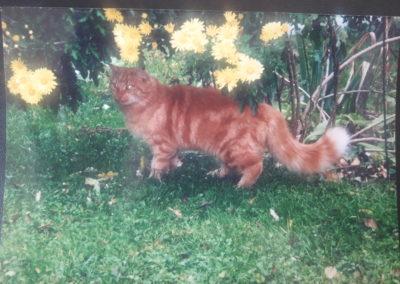 Katze, Absam(07/19)