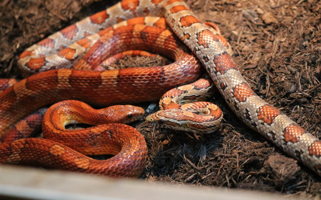 Mathilda & Snake