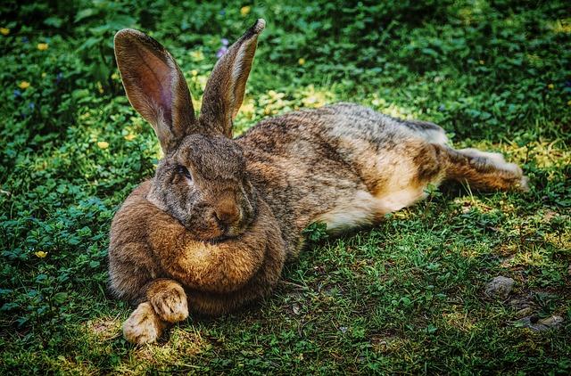 Sommer im Außengehege: Was ist bei der Haltung von  Kaninchen und Meerschweinchen im Freien zu beachten?