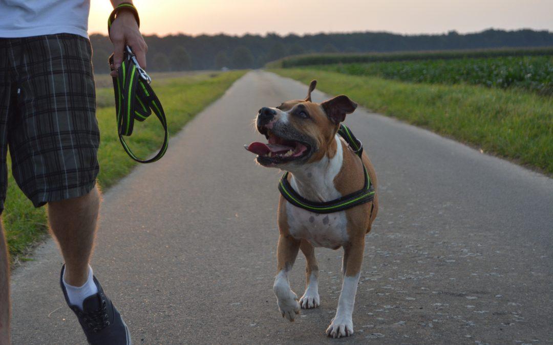 Stellungnahme des Tierschutzvereins für Tirol 1881 zum Gesetzesentwurf mit dem das Landes-Polizeigesetz in Hinblick auf die Haltung von Hunden geändert werden soll