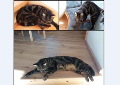 Tiger, Kirchdorf(08/19)