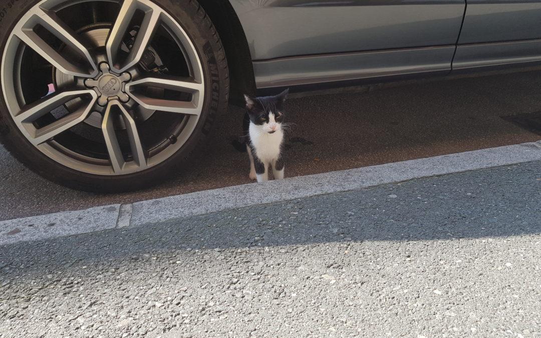 Katze, Kufstein(08/19)