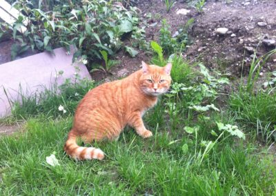 Katze, Tulfes(08/19)