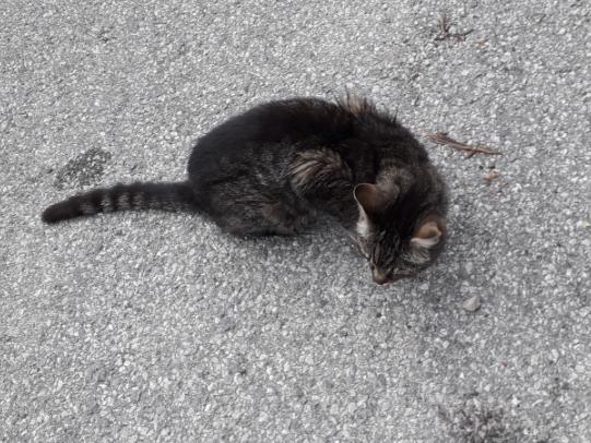 Katze, Zirl(08/19)