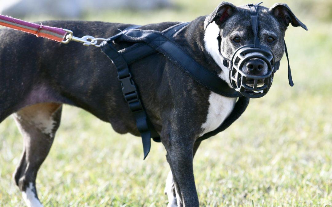 Artikel Kronenzeitung: Tierschutzverein klar gegen Beißkorbpflicht