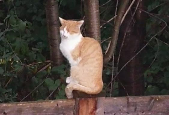 Katze, Eichat(09/19)