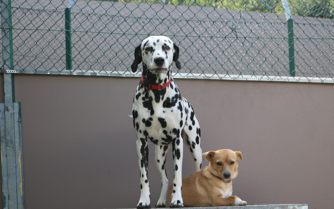 Helena & Rexy