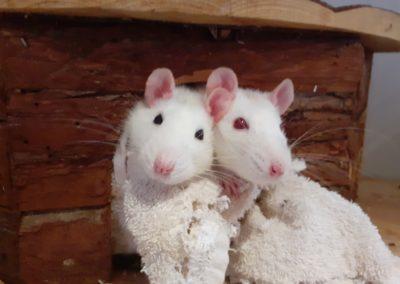 Lela und Lotte