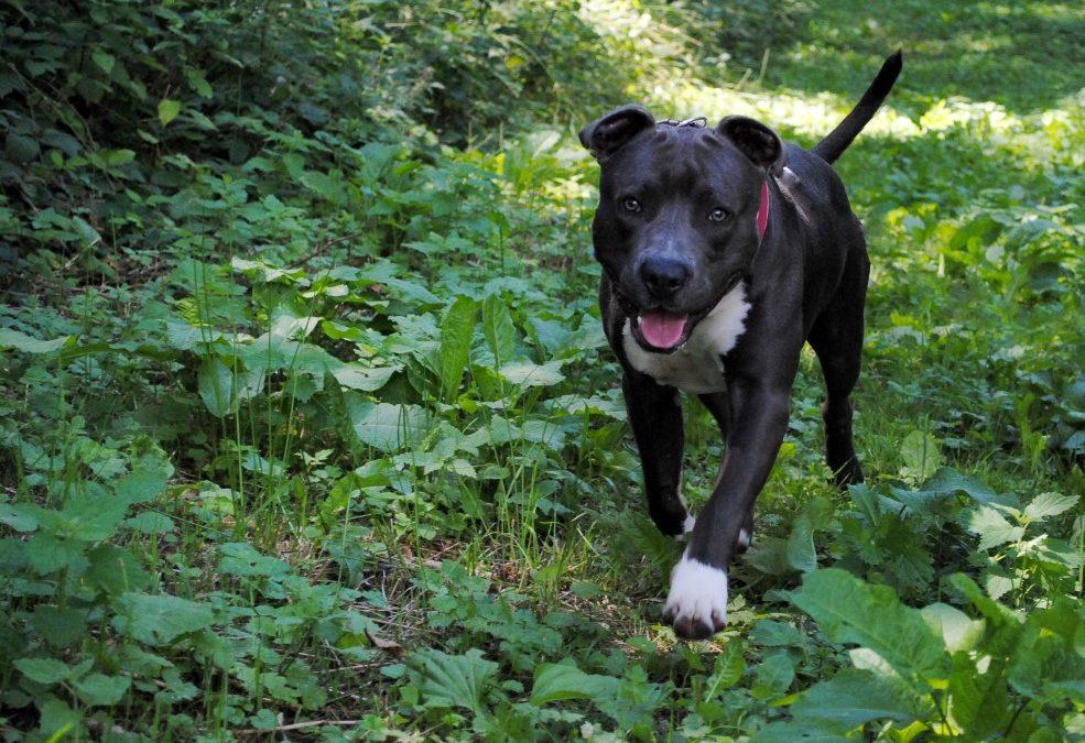 Nur noch 6 Tage: Online-Petition zur Hundehaltung