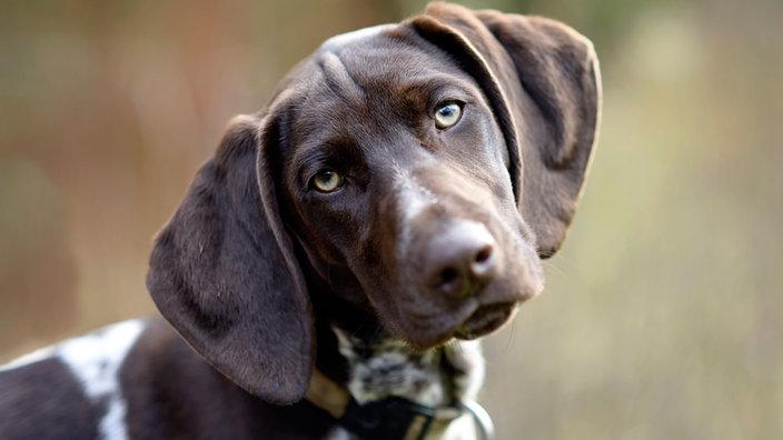 Hund vom Züchter oder vom Tierschutz?