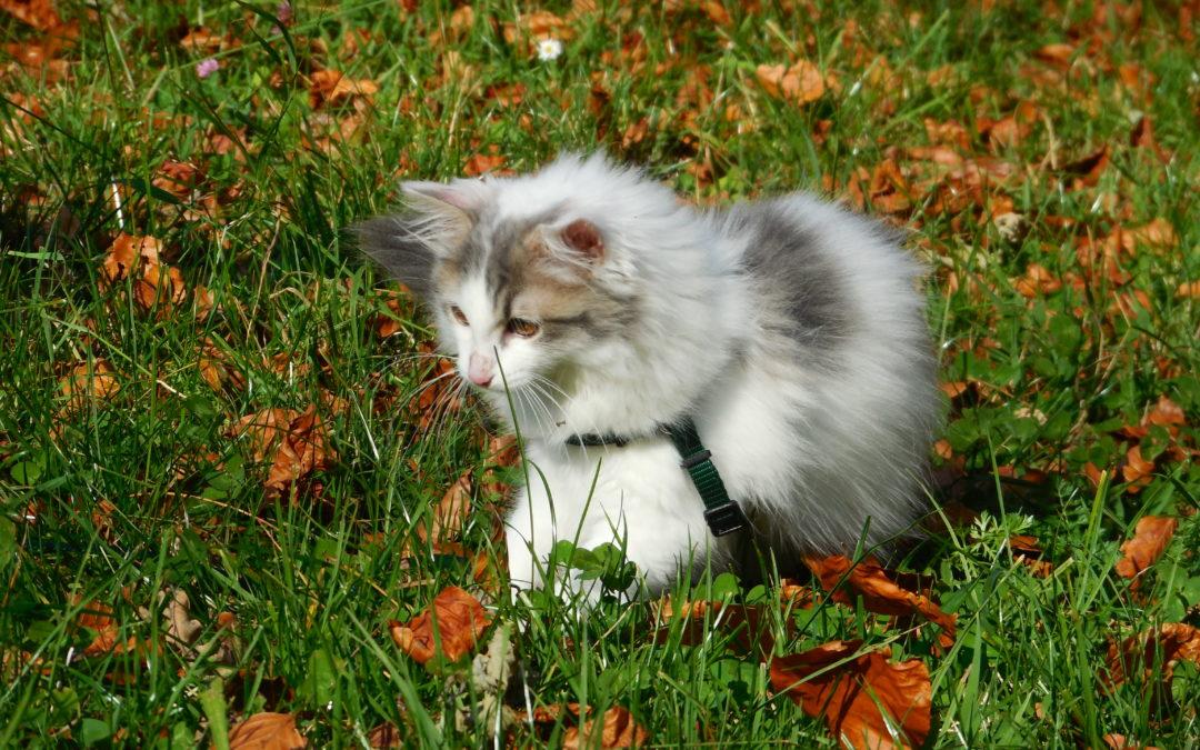 Junge Katzen langsam an Freigang gewöhnen