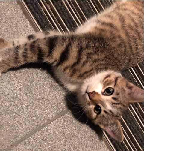 Katze, Absam(10/19)