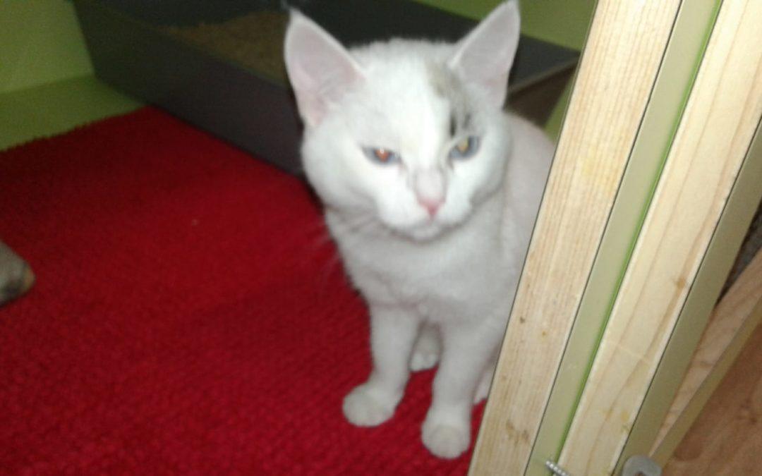 Fritzens, Katze(10/19)