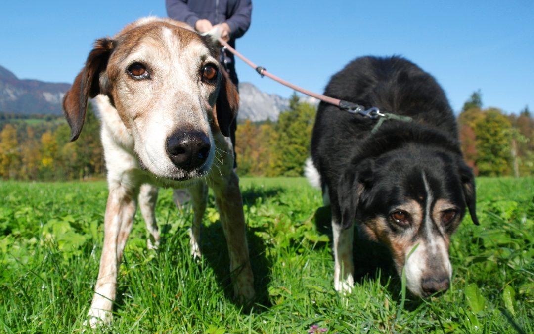Gnadenplatz für zwei Senioren-Hunde dringend gesucht!