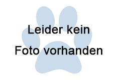 Katze, Volders(10/19)