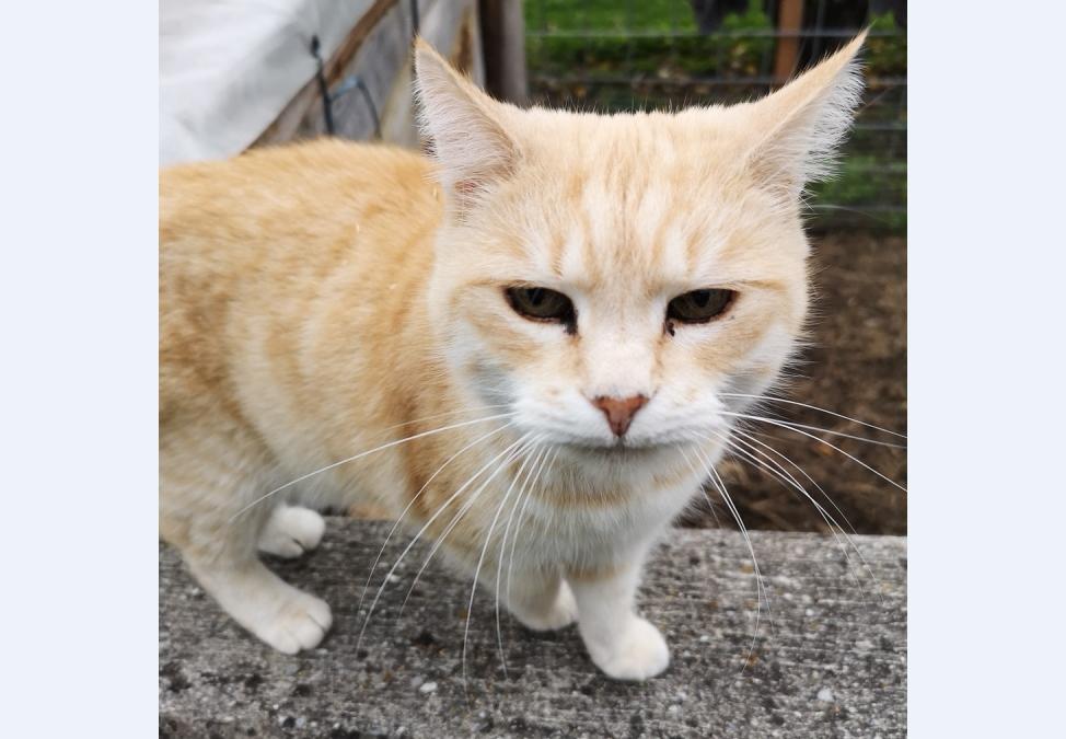 Katze, Telfs(10/19)