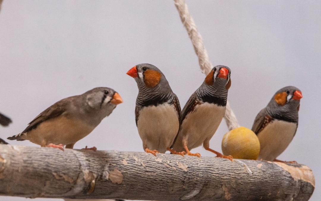 Kunterbunte Vogelschar