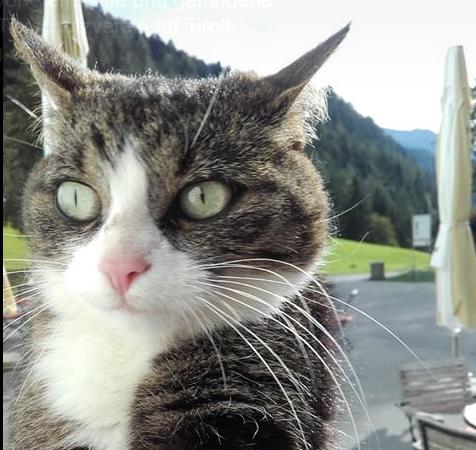 Katze, Zams(10/19)