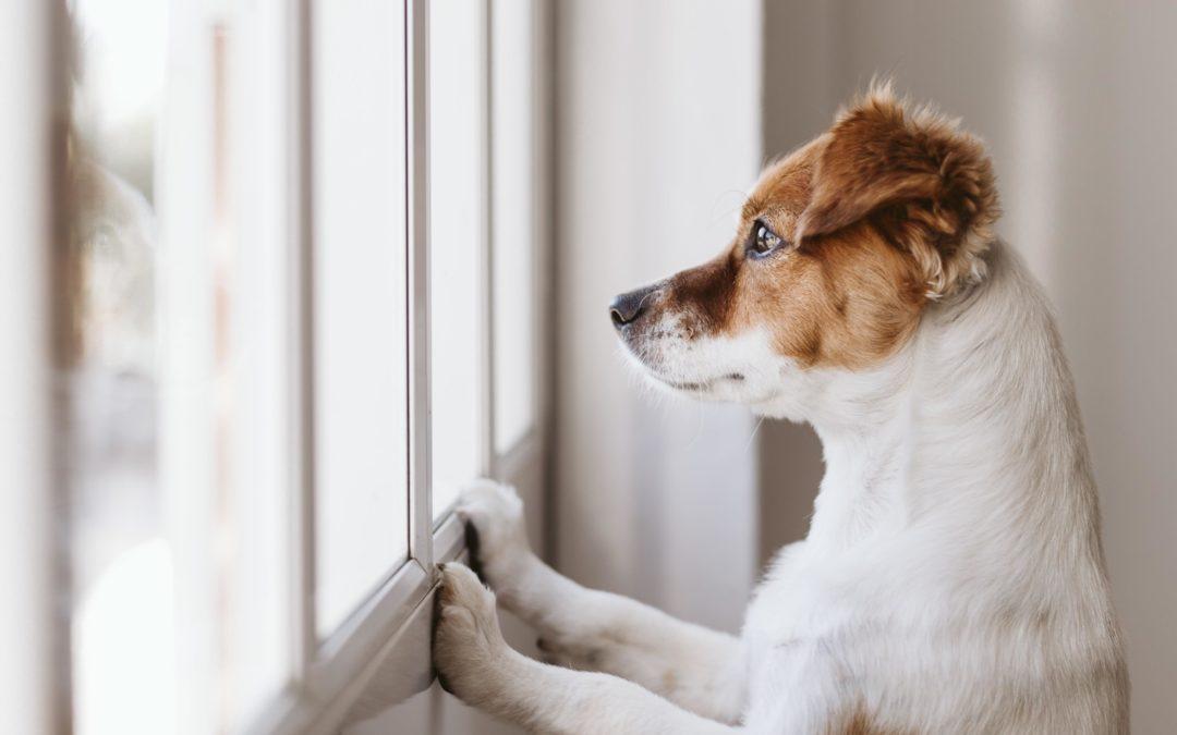 Artikel Kronenzeitung am 4.10.2019 – Immer mehr Hundebesitzer überfordert