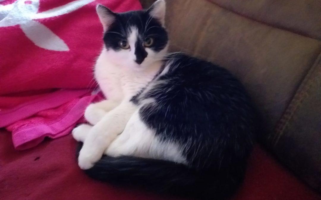 Katze, Kufstein(11/19)