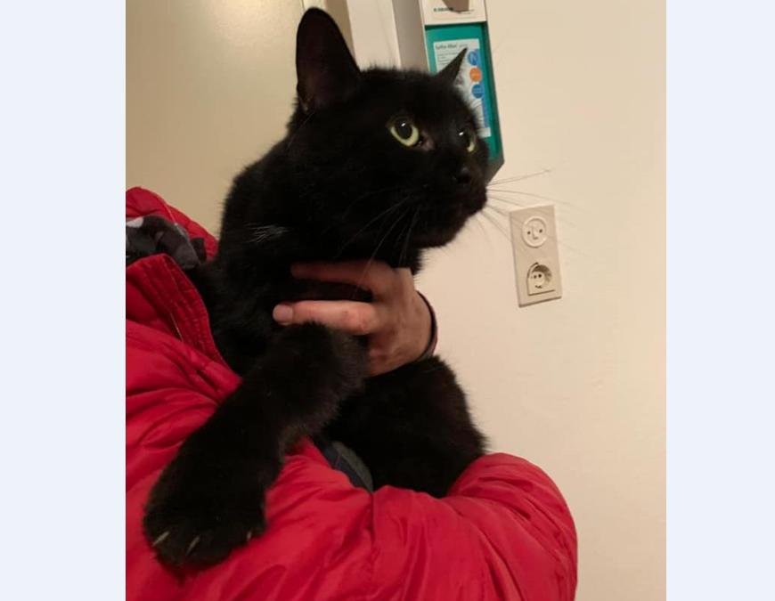 Katze, Mieming(11/19)