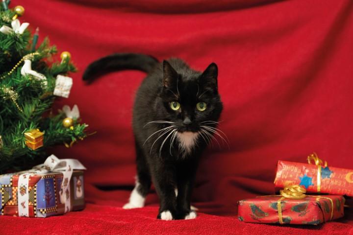 Weihnachtsaktionen für unsere Schützlinge