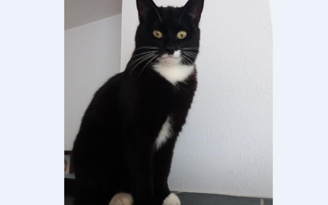 Katze, Wildschönau(11/19)