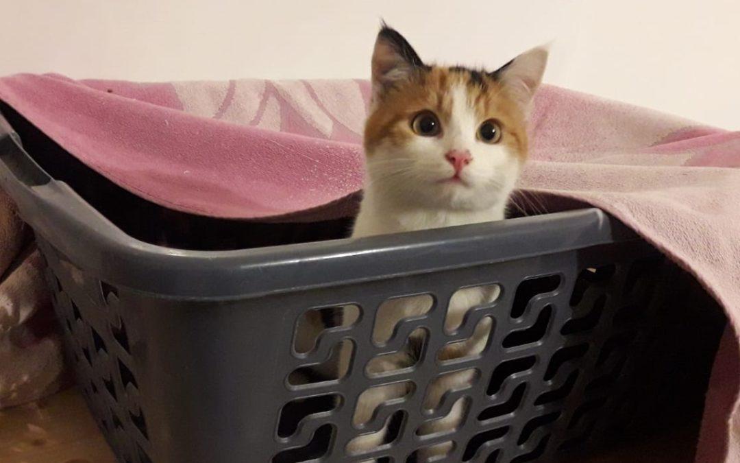 Ungesicherter Katzentransport mit Folgen