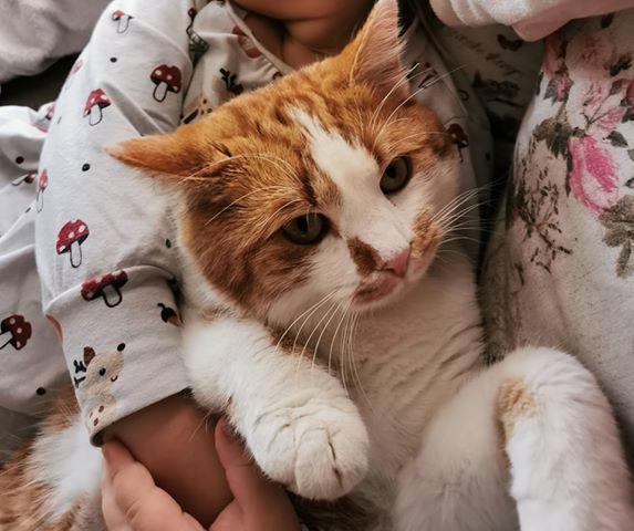 Garfield, Musau(01/20)