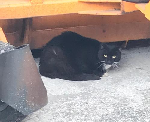 Katze, Gschnitz(01/20)
