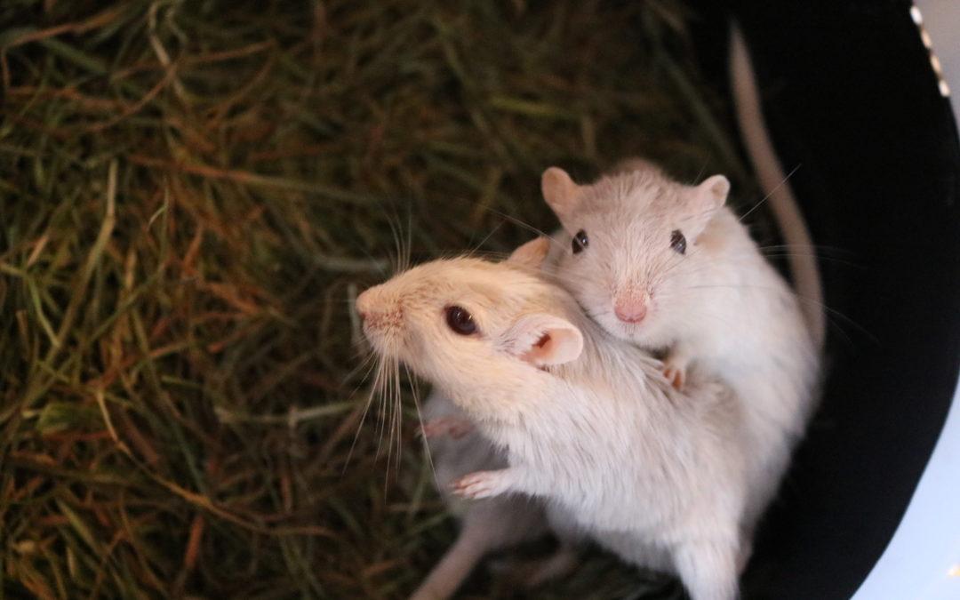 Alvin, Simon & Theodor