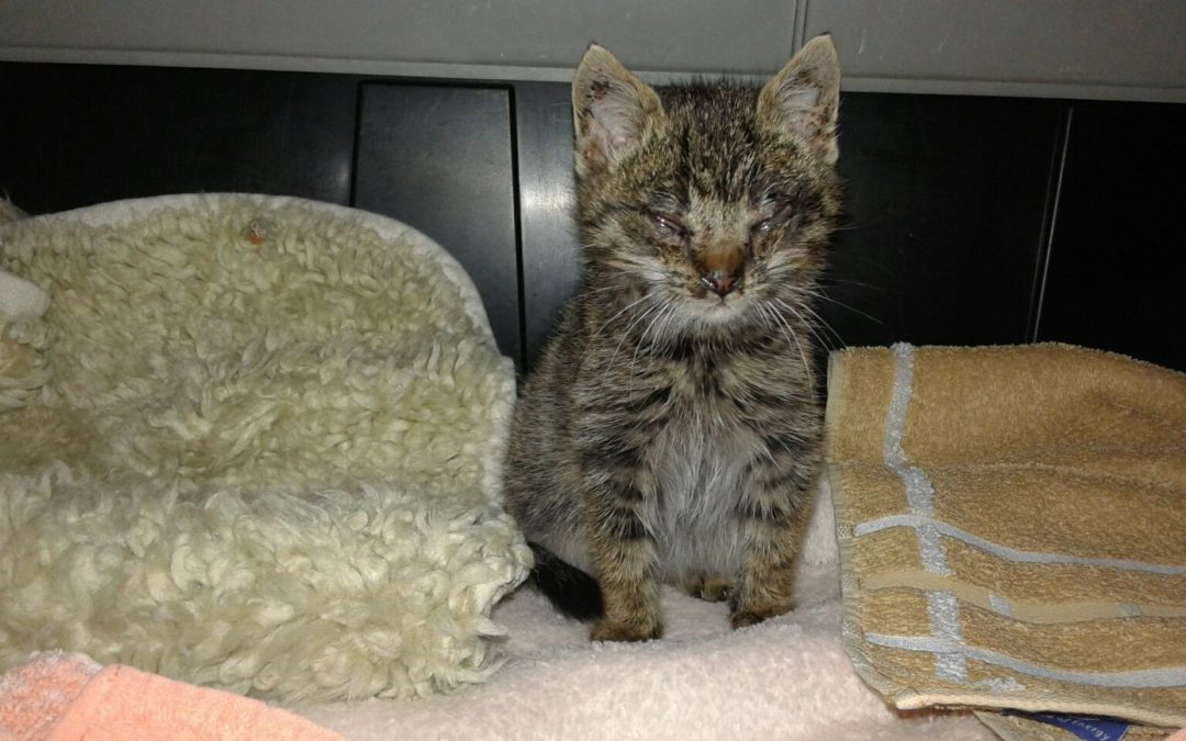 Massenweise Streunerkatzen – trotz Kastrationsgesetz