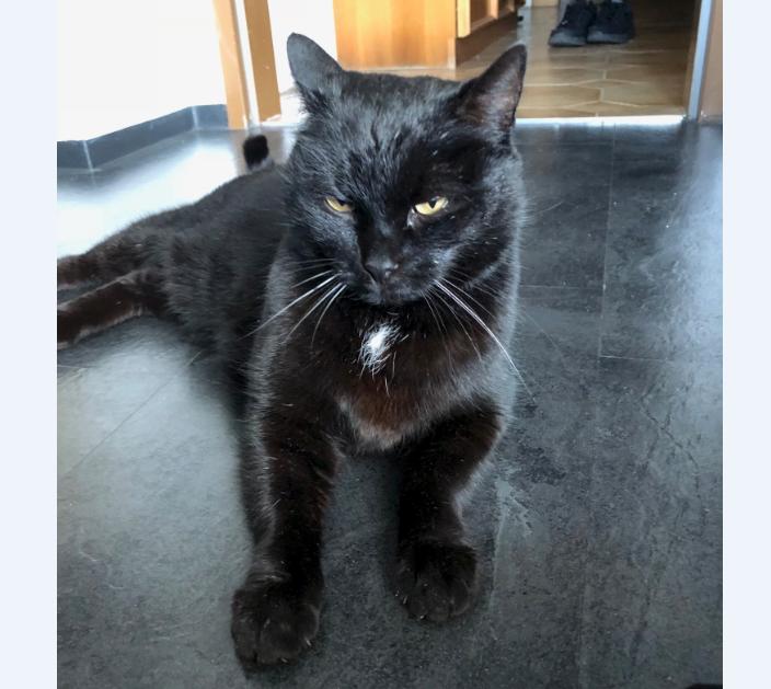 Katze, Volders(01/19)