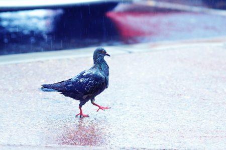 Wie ergeht es Vögeln bei Sturm, Gewitter und Regen