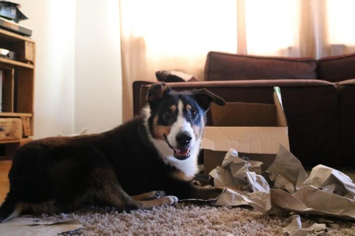 Auslastungsspiele für Hunde #1 – Überraschungsbox