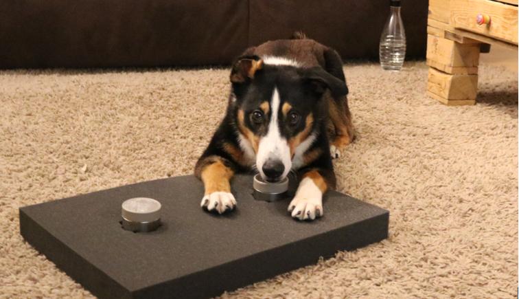 Auslastungsspiele für Hunde #2 – Geruchsunterscheidung