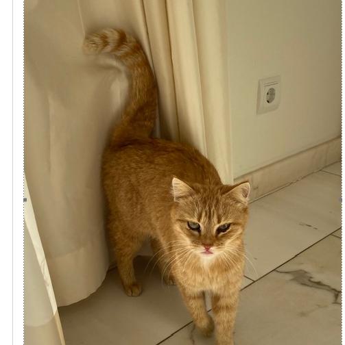 Katze, Aldrans(03/20)