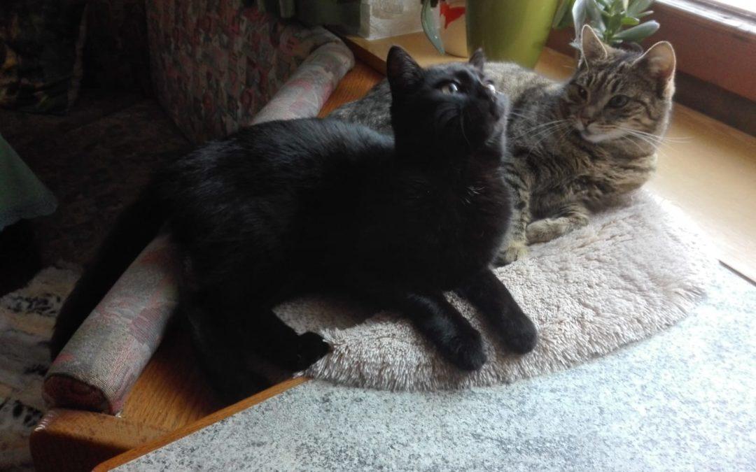Katze, Strass(03/20)