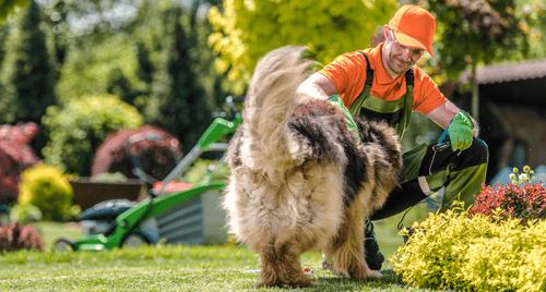 Tierschutzverein Job Hausbetreeung