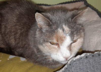 Katze, Absam(04/20)