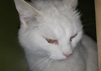 Katze, Axams(05/20)