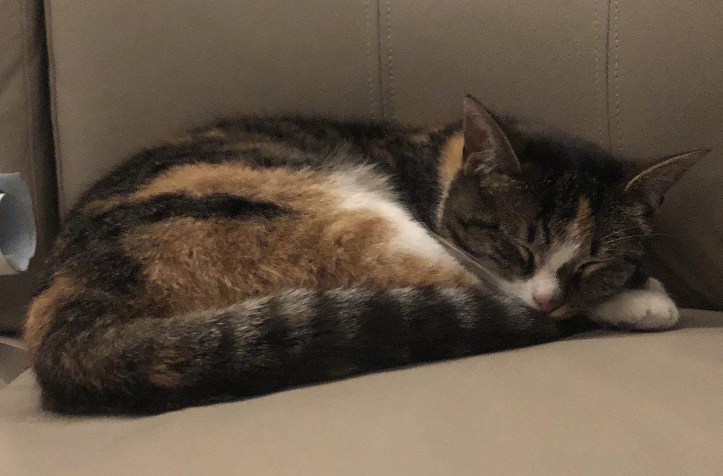 Katze, Natters(05/20)