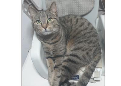 Katze, Telfs(05/20)